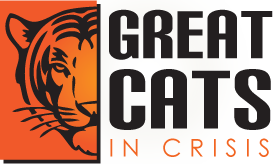 Great Cats in Crisis
